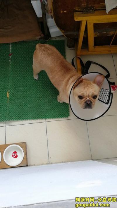 泰安找狗,丢失爱犬,找到重谢,感恩!!!!!!,它是一只非常可爱的宠物狗狗,希望它早日回家,不要变成流浪狗。