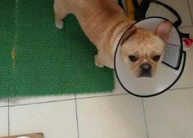 寻狗启示,丢失爱犬,找到重谢,感恩!!!!!!,它是一只非常可爱的宠物狗狗,希望它早日回家,不要变成流浪狗。