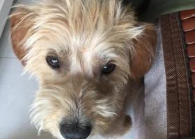 寻狗启示,寻爱狗,五里庙石材城地区走失,它是一只非常可爱的宠物狗狗,希望它早日回家,不要变成流浪狗。