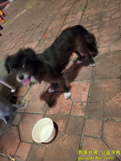 汕头捡到狗,星湖豪景附近一条狗狗找失主&领养,它是一只非常可爱的宠物狗狗,希望它早日回家,不要变成流浪狗。