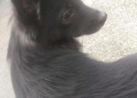 寻找我家可爱的爱犬贝贝