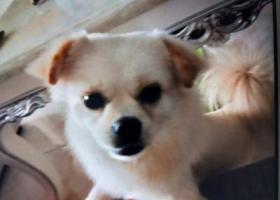 寻狗启示,狗狗在观月小区一带走失,它是一只非常可爱的宠物狗狗,希望它早日回家,不要变成流浪狗。