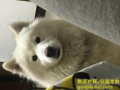 楚雄找狗,寻狗启示,寻家人英萨小白,它是一只非常可爱的宠物狗狗,希望它早日回家,不要变成流浪狗。