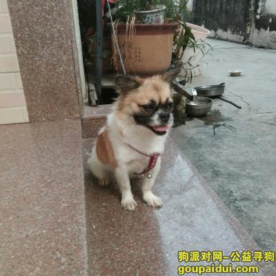 揭阳找狗,家里狗狗丢失了,恳请好心人帮帮忙。,它是一只非常可爱的宠物狗狗,希望它早日回家,不要变成流浪狗。