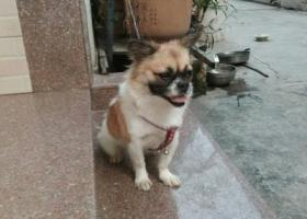 寻狗启示,家里狗狗丢失了,恳请好心人帮帮忙。,它是一只非常可爱的宠物狗狗,希望它早日回家,不要变成流浪狗。