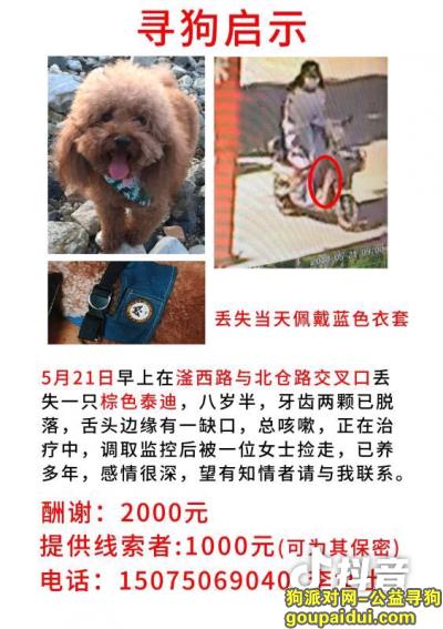 ,寻找泰迪狗狗希望好心人多多帮忙谢谢必有两千酬谢,它是一只非常可爱的宠物狗狗,希望它早日回家,不要变成流浪狗。
