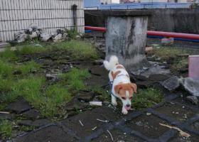 寻狗启示,广州奥体附近重金找狗,它是一只非常可爱的宠物狗狗,希望它早日回家,不要变成流浪狗。