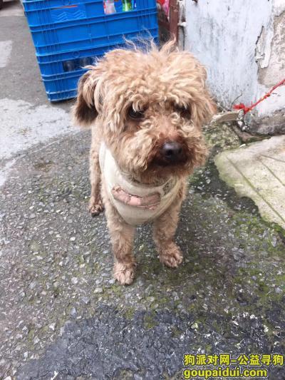 南京捡到狗,捡到小泰迪狗一只2岁,它是一只非常可爱的宠物狗狗,希望它早日回家,不要变成流浪狗。
