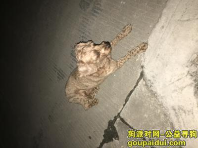 东莞找狗主人,我家门口发现一只受伤的狗,它是一只非常可爱的宠物狗狗,希望它早日回家,不要变成流浪狗。