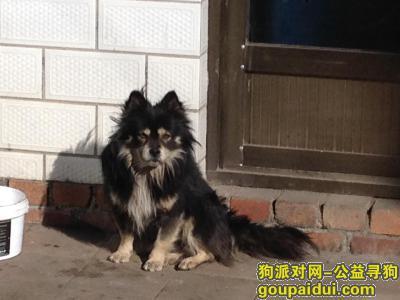 晋中寻狗网,寻找陪伴我11年的小狗!,它是一只非常可爱的宠物狗狗,希望它早日回家,不要变成流浪狗。