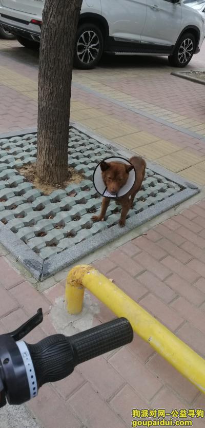 淮南寻狗,在路边发现的棕色小狗,请问怎么办,它是一只非常可爱的宠物狗狗,希望它早日回家,不要变成流浪狗。