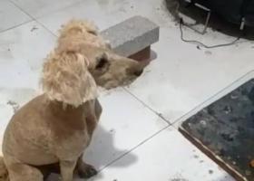 寻狗启示,寻找爱犬,如有捡到重金感谢,它是一只非常可爱的宠物狗狗,希望它早日回家,不要变成流浪狗。