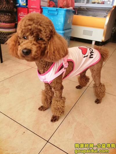 曲靖寻狗启示,曲靖市麒麟区西苑小区,它是一只非常可爱的宠物狗狗,希望它早日回家,不要变成流浪狗。