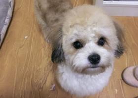 寻狗启示,希望好心人帮帮忙谢谢了,它是一只非常可爱的宠物狗狗,希望它早日回家,不要变成流浪狗。