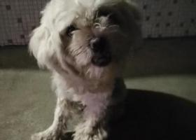 寻狗启示,谁丢的白色狗狗,山财大舜耕校区北门传达室,它是一只非常可爱的宠物狗狗,希望它早日回家,不要变成流浪狗。