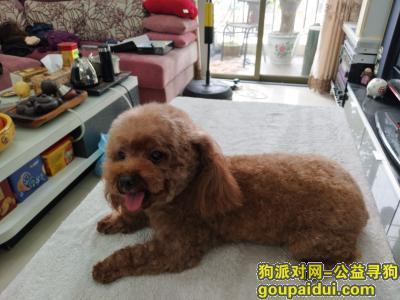 ,顺德区大良镇寻犬启示,它是一只非常可爱的宠物狗狗,希望它早日回家,不要变成流浪狗。