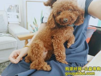中山找狗主人,小榄镇北区捡到一只狗,它是一只非常可爱的宠物狗狗,希望它早日回家,不要变成流浪狗。