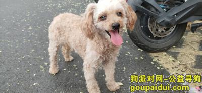 淄博捡到狗,寻找狗狗主人,我想回家,它是一只非常可爱的宠物狗狗,希望它早日回家,不要变成流浪狗。