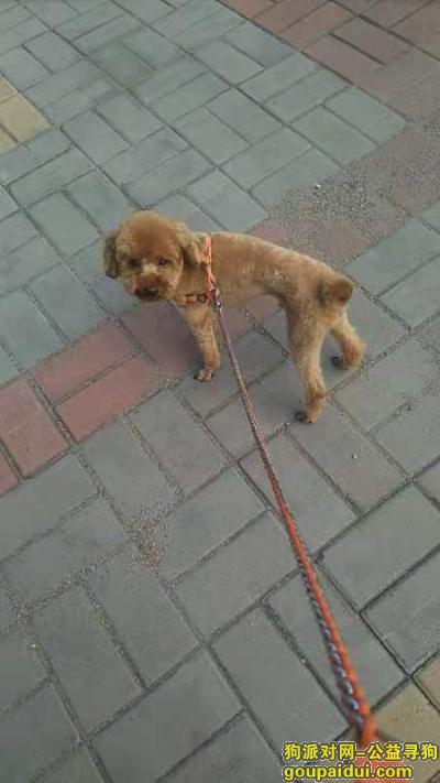 寻狗启示,昨天上午在兰家东喻沟丢失!,它是一只非常可爱的宠物狗狗,希望它早日回家,不要变成流浪狗。