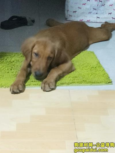 三亚寻狗启示,2019年7月14日在三亚市吉阳镇荔枝沟路乐天城丢失一只金毛犬(母),它是一只非常可爱的宠物狗狗,希望它早日回家,不要变成流浪狗。