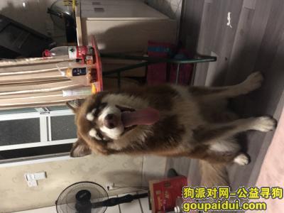 寻狗启示,6.17号晚9点在湘云雅苑小区走丢,它是一只非常可爱的宠物狗狗,希望它早日回家,不要变成流浪狗。