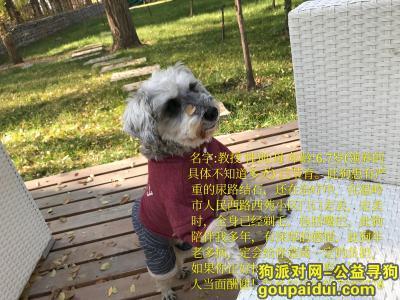 ,温岭西苑小区附近丢失雪纳瑞,它是一只非常可爱的宠物狗狗,希望它早日回家,不要变成流浪狗。