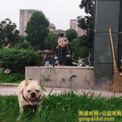 铜陵寻狗启示,七月十八号丢失于金御华府,一只法斗,它是一只非常可爱的宠物狗狗,希望它早日回家,不要变成流浪狗。