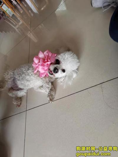 保定寻狗网,寻狗启示,请帮助我们!,它是一只非常可爱的宠物狗狗,希望它早日回家,不要变成流浪狗。