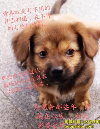 ,希望能找到我家的爱犬,它是一只非常可爱的宠物狗狗,希望它早日回家,不要变成流浪狗。