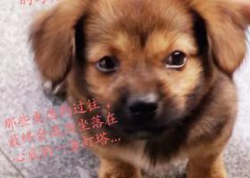 寻狗启示,希望能找到我家的爱犬,它是一只非常可爱的宠物狗狗,希望它早日回家,不要变成流浪狗。