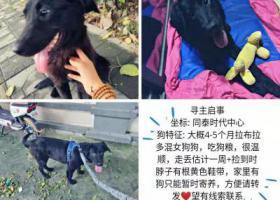 寻狗启示,黑色拉布拉多混女狗狗,它是一只非常可爱的宠物狗狗,希望它早日回家,不要变成流浪狗。