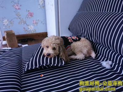 桂林丢狗,麻烦帮找一下球球 在和平村320号附近 7.20号下午两点左右丢的,它是一只非常可爱的宠物狗狗,希望它早日回家,不要变成流浪狗。