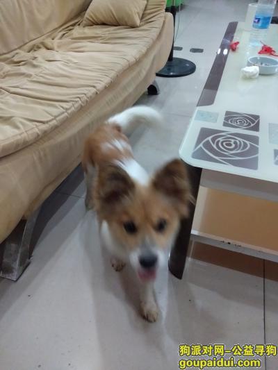 吉安找狗,小可怜,主人等你回家哦!,它是一只非常可爱的宠物狗狗,希望它早日回家,不要变成流浪狗。