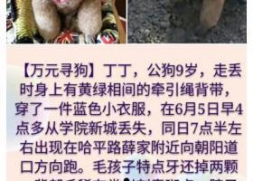 寻狗启示,哈尔滨万元寻泰迪公狗,它是一只非常可爱的宠物狗狗,希望它早日回家,不要变成流浪狗。