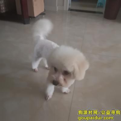 常德寻狗,狗狗不见5天了 捡到者联系我必有重谢,它是一只非常可爱的宠物狗狗,希望它早日回家,不要变成流浪狗。