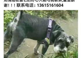 寻狗启示,寻找丢失的黑色雪纳瑞,它是一只非常可爱的宠物狗狗,希望它早日回家,不要变成流浪狗。