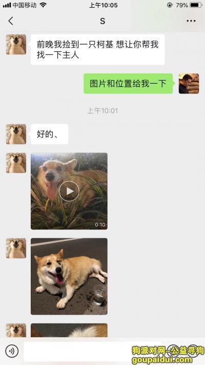 ,谁家的柯基犬掉了,21号晚上捡的,台州市临海市江滨中路附近捡,13585555007,它是一只非常可爱的宠物狗狗,希望它早日回家,不要变成流浪狗。