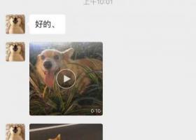 寻狗启示,谁家的柯基犬掉了,21号晚上捡的,台州市临海市江滨中路附近捡,13585555007,它是一只非常可爱的宠物狗狗,希望它早日回家,不要变成流浪狗。