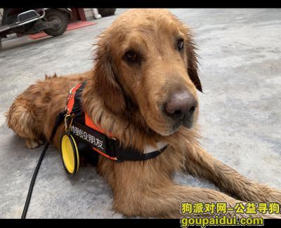绍兴寻狗,#诸暨寻狗#朋友们帮帮忙,它是一只非常可爱的宠物狗狗,希望它早日回家,不要变成流浪狗。