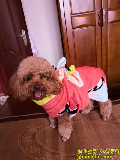 桂林寻狗,寻找贵宾《乖乖》,必有重谢,它是一只非常可爱的宠物狗狗,希望它早日回家,不要变成流浪狗。