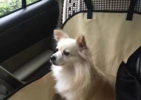 寻狗启示,家里狗狗7月21日在重庆市巴南区恒大城2期走丢。麻烦大家又看到过她的联系下我们,拜托了,它是一只非常可爱的宠物狗狗,希望它早日回家,不要变成流浪狗。