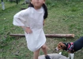 寻狗启示,珠海路附近比格犬丢失,它是一只非常可爱的宠物狗狗,希望它早日回家,不要变成流浪狗。