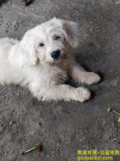 新余找狗,我的狗丢了,希望你们能帮我找到她它,它是一只非常可爱的宠物狗狗,希望它早日回家,不要变成流浪狗。