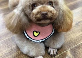 寻狗启示,北京寻狗,在西红门走丢,它是一只非常可爱的宠物狗狗,希望它早日回家,不要变成流浪狗。