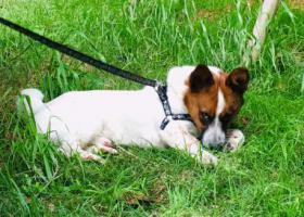 寻狗启示,救救我可怜的狗宝贝,必有重赏,它是一只非常可爱的宠物狗狗,希望它早日回家,不要变成流浪狗。