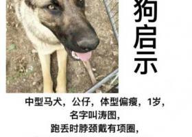 寻狗启示,图图,长得凶,但是非常乖。,它是一只非常可爱的宠物狗狗,希望它早日回家,不要变成流浪狗。