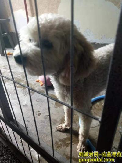 达州寻狗网,找狗狗,定酬谢!!!,它是一只非常可爱的宠物狗狗,希望它早日回家,不要变成流浪狗。
