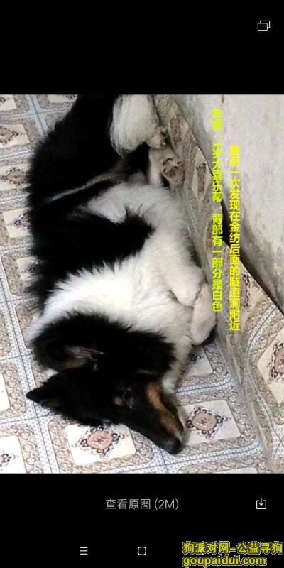 ,求小伙伴如果看到它的话,一定要联系我13414959410,它是一只非常可爱的宠物狗狗,希望它早日回家,不要变成流浪狗。