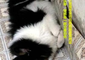 寻狗启示,求小伙伴如果看到它的话,一定要联系我13414959410,它是一只非常可爱的宠物狗狗,希望它早日回家,不要变成流浪狗。