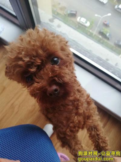 淮南寻狗启示,基地美食街附近丢失一棕色泰迪,它是一只非常可爱的宠物狗狗,希望它早日回家,不要变成流浪狗。